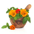 Nasturtium Flowers and Mint Herb Stock Photography