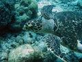 Nasty turtle Stock Photo