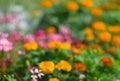 Natürlicher Hintergrund - undeutlicher Flower-bed Stockfoto