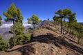 National park way toi pico bejenado on the island la palma cana canary islands spain Stock Photos