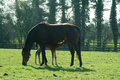 National Stud Farm Ireland Royalty Free Stock Photos