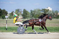 National trotting derby in Ploiesti - Race winner