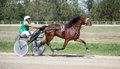National trotting derby in Ploiesti - third place