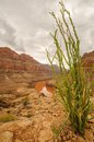 Nationalpark grand canyon s nevada Stockfotografie