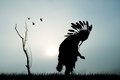 Native America Indian Royalty Free Stock Photo