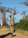Native Malagsy near Baobab trees Stock Photography