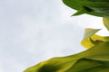 Natur background Royalty Free Stock Photo