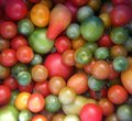Picture : Natur product, many tomatoes of different sizes and varieties.