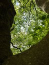 Picture : Natur Wald wood forest Natur  must maria-theresien-platz
