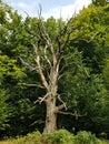 Photo : Natur Wald wood forest Natur