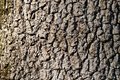 Natural background made of a closeup of brown tree bark with wide grooves. Royalty Free Stock Photo