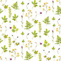 Natural background with wild flowers, plants and fern leaves. Watercolor botanical seamless pattern with hand painted Royalty Free Stock Photo