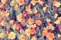 Natural begonia flower Royalty Free Stock Photo