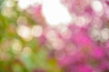 Natural Bokeh Royalty Free Stock Photo