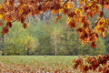 Natural bokeh background bordered with leaves Royalty Free Stock Photo