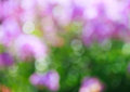 Natural bokeh background with drops of rain in purple and green colors Stock Images