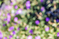 Natural bokeh green background of out of focus purple flowers Stock Photos