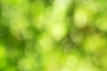 Natural bokeh outdoors in green and yellow tones Stock Photography