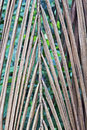 Natural braided dried palm leaf Royalty Free Stock Photo