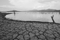 Natural disaster. arid climate Stock Photography