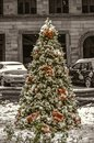 Natural fir-tree growing outside, covered with the first snow,decorated with Christmas decorations, white balls, red poinsettia Royalty Free Stock Photo