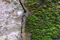 Natural fractured stone and moss in forest Royalty Free Stock Photo