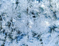 Natural frosty pattern on glass delicate in the house Royalty Free Stock Images