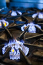 Natural gas stove in a restaurant kitchen Stock Photos