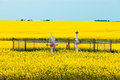 Natural gas wellheads canola agricultural farmland Royalty Free Stock Photo