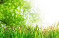 Natural green background with selective focus grass and sun shine Royalty Free Stock Images