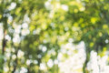 Natural green forest bokeh background