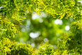 Natural green leaves border with blur bokeh spring or summer background Royalty Free Stock Photo