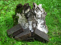 Natural handmade tar soap bars on grass and birch bark backgroun Royalty Free Stock Photo