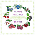 Natural healthful berries hand drawn vector illustration Stock Photos