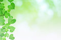 Natural heart-shaped green leaves, soft focus blurry background Royalty Free Stock Photo