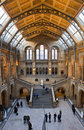 Natural history museum in london the beautiful interior of the Stock Image