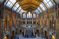Natural history museum in london the beautiful interior of the Royalty Free Stock Images