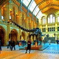 Natural history museum london england the main hall of the exhibiting a prehistoric dinosaur s skeleton Stock Image