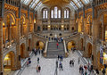 Natural history museum london united kingdom november famous london big hall interior with tourists visitors Stock Images