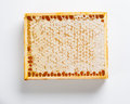 Natural honeycomb wax in frame on white background Royalty Free Stock Image