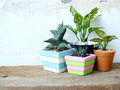 Natural house plants on wooden background texture with space copy Royalty Free Stock Photo
