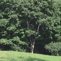 Natural landscape view of dense green trees and grass Royalty Free Stock Photo