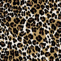 Natural leopard skin Royalty Free Stock Photo