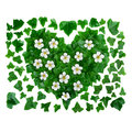 Natural organic pattern background made of green ivy leaves and white flowers. Royalty Free Stock Photo