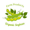 Natural organic soybeans. Eco-friendly vegetarian nutrition. Made in flat style.