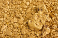 Natural Placer Gold Nuggets Royalty Free Stock Photo