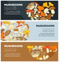 Natural ripe mushrooms from forest grown without pesticides Royalty Free Stock Photo