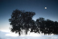Natural scenery at night of moon tree s sketch and are beautiful on the lake in winter Royalty Free Stock Photography