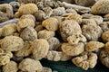 Natural sea sponge harvested in kalymnos greece Royalty Free Stock Photo