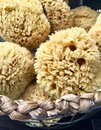 Natural Sea Sponges
